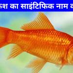 Goldfish Ka Scientific Naam Kya Hai | गोल्डफिश का साइंटिफिक नाम क्या है?