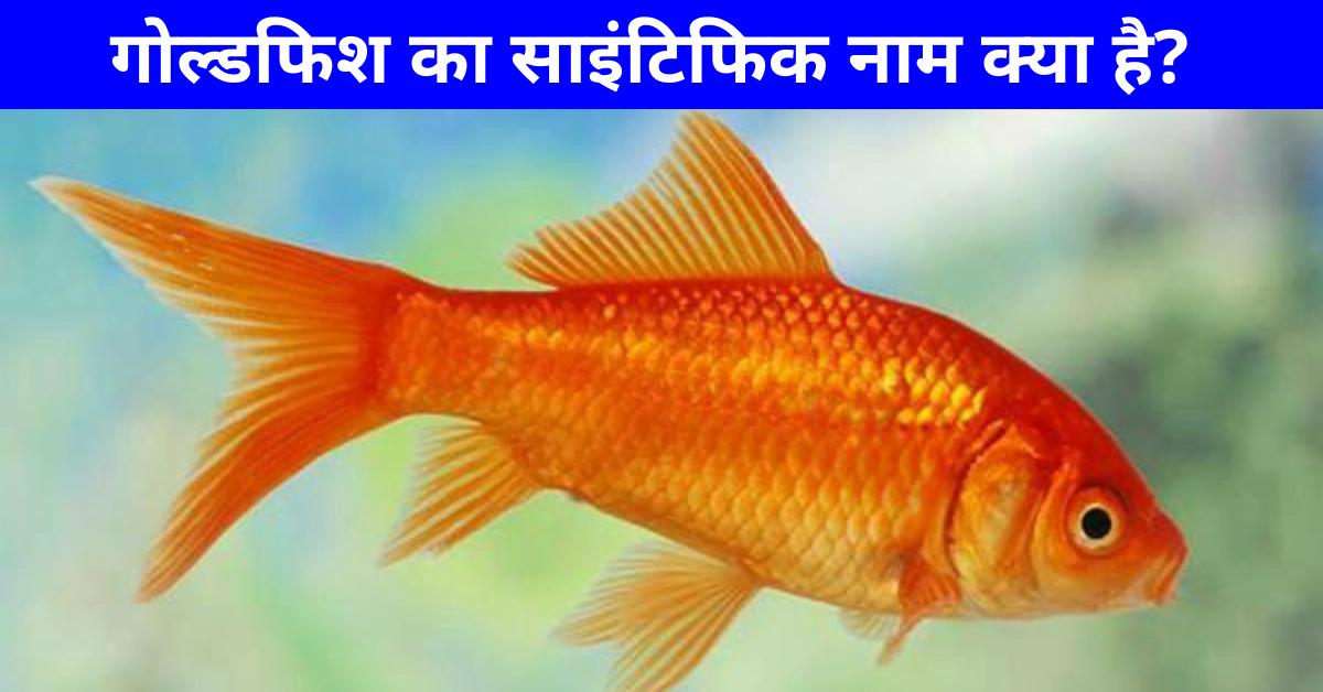 Goldfish Ka Scientific Naam Kya Hai   गोल्डफिश का साइंटिफिक नाम क्या है?